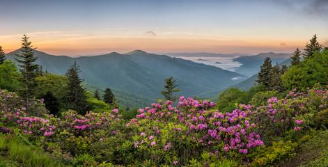 Acrylic Prints Mountains Blue Ridge Mountains, Rhododendron, sunrise
