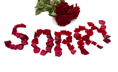 """text """"forgive"""" also bouquet  of red roses"""