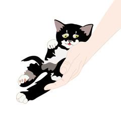 Happy kitten on human hand