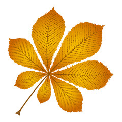 Wall Mural - autumn leaf chestnut