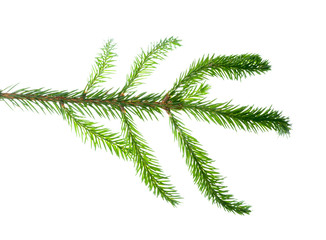 Closeup view of fir branch isolated on white