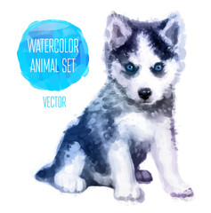 Vector Huskies hand painted watercolor illustration isolated on