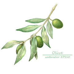 watercolor olive branch card.