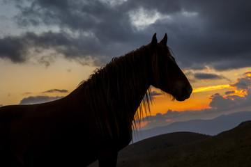 Silhouette di un cavallo nero in montagna. Luce del tramonto arancione, nuvole sullo sfondo