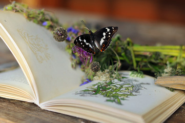 Book on wooden table with flowers, butterfly in the  village