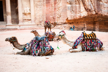 Camels near the Al Khazneh or The Treasury at Petra, Jordan. Petra is one of the New Seven Wonders of the World. UNESCO World Heritage