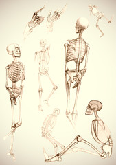 Sketch of skeletons - vector illustration