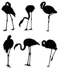 set of six flamingo silhouettes isolated on white