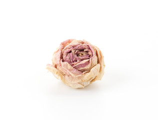dry pink and white rose