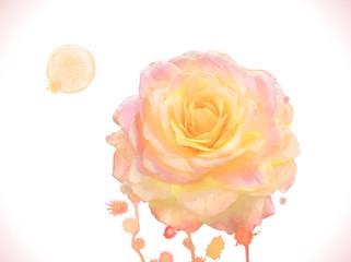 Watercolor vector orange rose