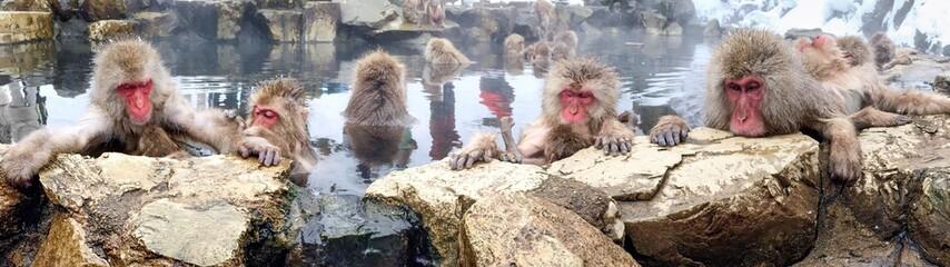 Affen baden in einer heißen Quelle in Japan Yudanaka