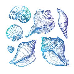 Vector set with sea shell isolated on white. Vector illustration. Watercolor.