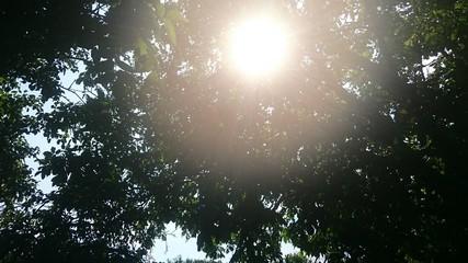 Солнечные лучи через крону деревьев