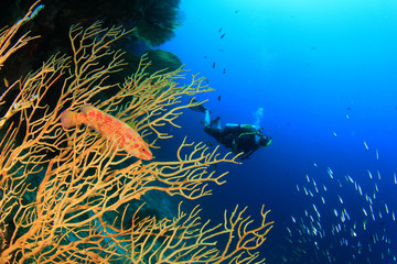 Scuba diving with fish and coral