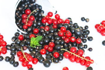 Black currant and red currant