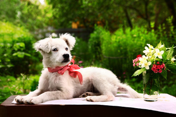 fluffy white puppy with vase of jasmin and carnation flowers