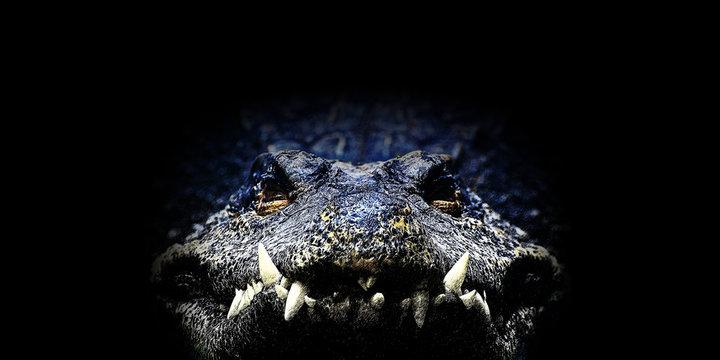 Crocodile, Illustration