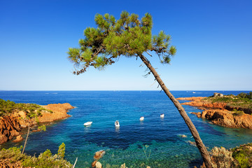 Aluminium Prints Sea Esterel, tree, rocks beach coast and sea. Cote Azur, Provence
