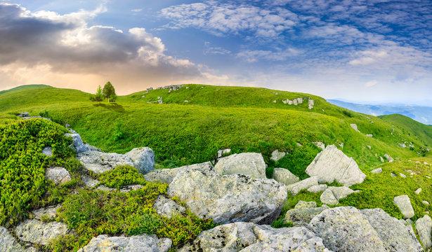 trees on hillside among huge boulders at sunrise