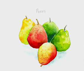pears'watercolor painted