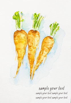 parsnips'watercolor painted