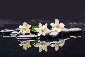 Set of three gardenia with therapy stones