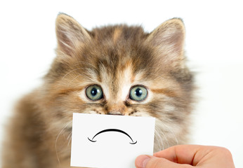 Papier Peint - unhappy or sad cat isolated