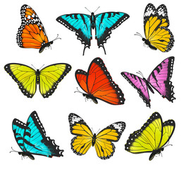 Set of colorful butterflies illustration