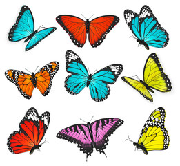 a set of realistic colorful butterflies illustration