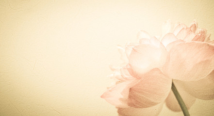 sweet color flower petals in soft color and blur style on mulberry paper texture
