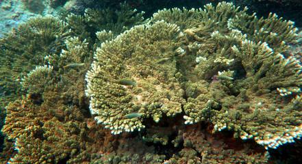 Poissons tropicaux sur un récif corallien