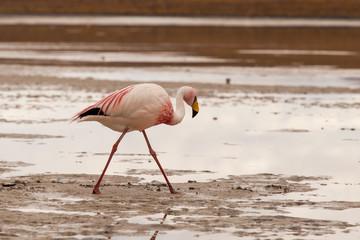 Fenicottero rosa riflesso sulla superficie di una laguna