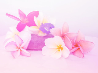 Abstract Plumeria Flower background. beautiful flowers made with colorful filters.