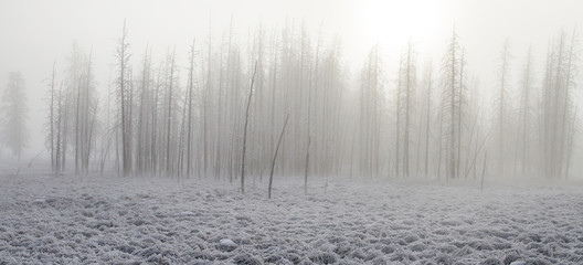 Frosted foggy petrified forest in the winter Fototapete