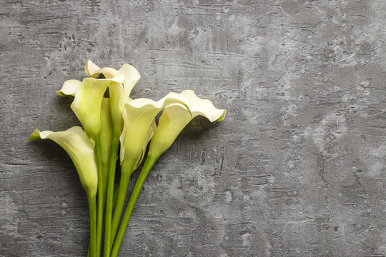 White calla flowers (Zantedeschia) on grey background,
