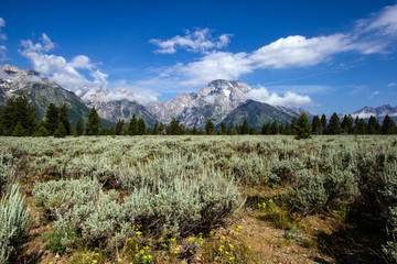 Sagebrush, mountains, and sky in Grand Teton National Park in Wyoming