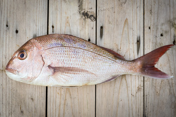 Whole Raw Snapper Fish