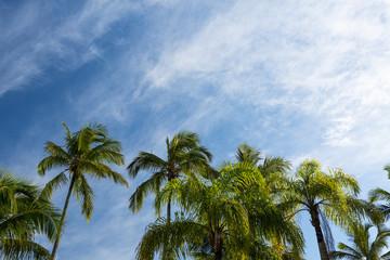 CoconutsTree