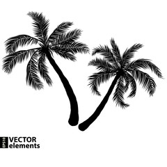 palm black silhouette. Vector illustration