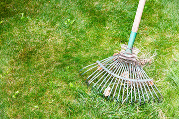 cleaning green lawn from leaves by rake