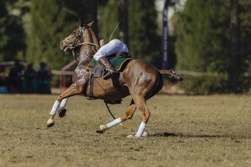 Polo-Cross game action horse rider player scoops ball off ground