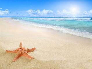 Sunny beach with starfish