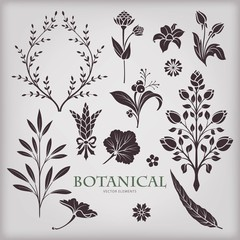 Botanical vector set