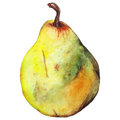 Watercolor pear yellow green fruit vector isolated