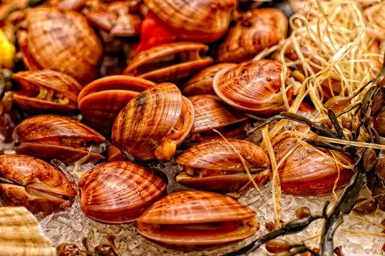 Muscheln Meeresfrüchte Food