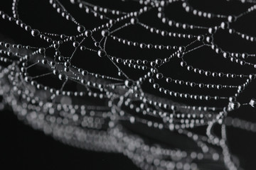 Dew drops on the spider web