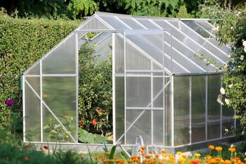 Fototapeta Greenhouse with tomato plants obraz