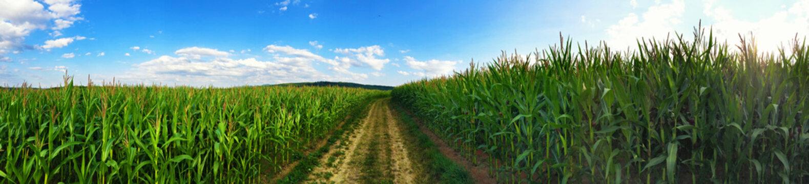 Weg durch die Maisfelder