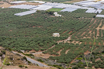 Olive Groves in Crete