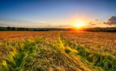 Acrylic Prints Village Golden Barley Field